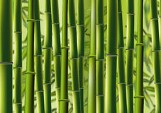Bamboo. Realistc Bamboo plant  in green background Stock Photography