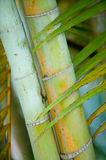 Bamboo Stock Photos