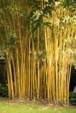 ?bamboo Stockbild