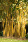 ?bamboo Immagine Stock