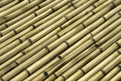 Bamboo. Many bamboo stowed in raws Stock Photo