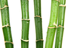 Bamboo. Green wet bamboo isolated on the white Royalty Free Stock Photos
