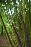 Bamboo. Brushwood in South Korea Royalty Free Stock Photos
