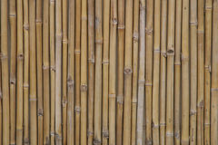 Free Bamboo Royalty Free Stock Image - 48756