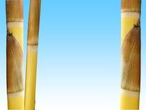 Bamboo. Golden bamboo stems Royalty Free Stock Photos