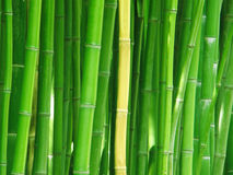 Free Bamboo Stock Photo - 5209090