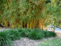 Bamboo. And green bushes in botanical garden royalty free stock images