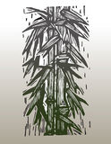 Bamboo. Hand drawn vector image of bamboo stock illustration