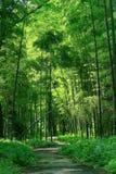 Bamboo Royalty Free Stock Photo