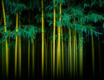 Free Bamboo Stock Images - 60696294