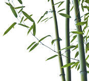 Bamboo. Silo of Bamboo on white background stock photo