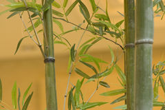 Bamboo. In the  chinese  building Royalty Free Stock Photography