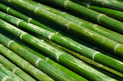Bamboo-02 Fotografia Royalty Free
