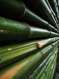 Bamboo. Green bamboo royalty free stock photos