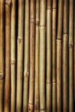 Bamboo. Beige bamboo stick background texture Stock Photos