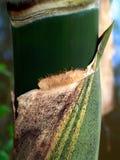 Bamboo royalty free stock image