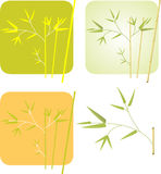 Bamboo. Floral background with copy space, vector illustration Royalty Free Stock Photo