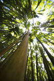 Bamboo Abstract Stock Photography