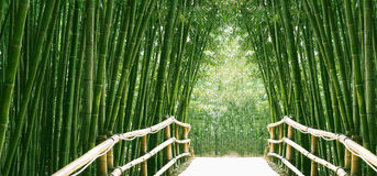 Bamboo Alley. A peaceful bamboo alley in the sundlight Royalty Free Stock Photo