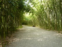 Bamboo alley Stock Image