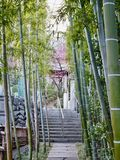 Bamboo Alley in Japan stock photography
