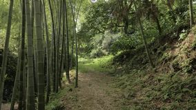 Bamboo alley in tropical rainforest at summer day in park - Batumi, Georgia. Bamboo alley in tropical rainforest at summer day in one of the biggest park stock footage