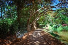 Bamboo alley, walk path and bench in Royal Botanic King Gardens. Peradeniya. Kandy. Sri Lanka. Royalty Free Stock Image