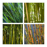 Bamboo and aquatic plants Royalty Free Stock Photo