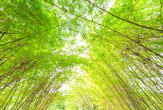 Bamboo arch background. Green bamboo arch in nature background Stock Image