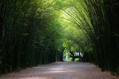 Bamboo arch in Thailand. Beautiful place far from Bangkok 2 hours Royalty Free Stock Images