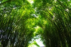 It is Bamboo arch at Wat Chulapornwanaram, The new famous touris. T attraction of Nakhon Nayok, Thailand Royalty Free Stock Photos