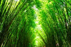 It is Bamboo arch at Wat Chulapornwanaram, The new famous touris. T attraction of Nakhon Nayok, Thailand Stock Images