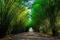 Bamboo arch at Wat Chulapornwanaram. The new famous tourist attraction of Nakhon Nayok, Thailand Stock Images