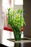 Bamboo arrangement Stock Photos