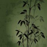Bamboo. Authors illustration in Stock Illustration