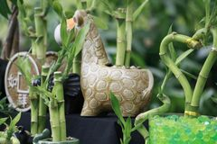 Bamboo stock image