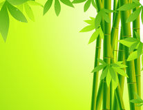 Bamboo background Stock Images