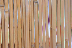 Bamboo background. The dry bamboo sticks background Stock Images