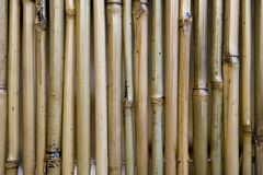 Bamboo background Stock Photo