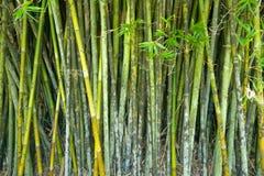 Bamboo background. Image of the bamboo background Royalty Free Stock Image