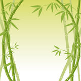 Bamboo background. This graphic is Bamboo background Royalty Free Stock Image