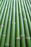 Bamboo background. Vertical green chinese bamboo background Royalty Free Stock Images