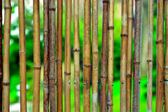 Bamboo background. On green blurry background with copyspace stock images