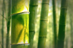 Bamboo for background Royalty Free Stock Images
