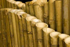 Bamboo background. Stock Photo