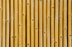 Bamboo background. Chinese bamboo wall texture background Royalty Free Stock Photo