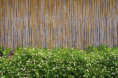 Bamboo background. Flower garden in front of Bamboo background Royalty Free Stock Image
