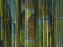 Bamboo background. Design of bamboo stems Royalty Free Stock Photos