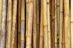 Bamboo. Background bamboo brown wood surface with a straight stem Stock Image