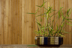Bamboo Background. Bamboo in a ceramic dish with a bamboo background Stock Image